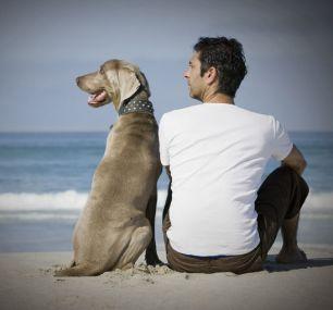 Nadużywanie psów